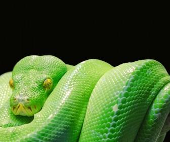 interpretacja snu Śnił się zielony wąż