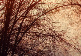 znaczenie snu Być w lesie