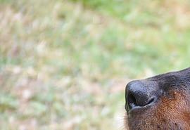 znaczenie snu Czarny pies