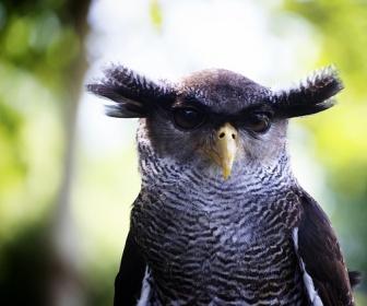 znaczenie snu Czarny ptak