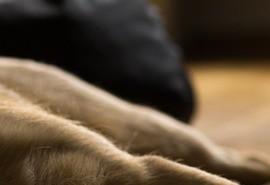 znaczenie snu Martwy pies