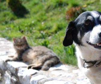 znaczenie snu Pies gryzie kota