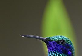 znaczenie snu Ptaki